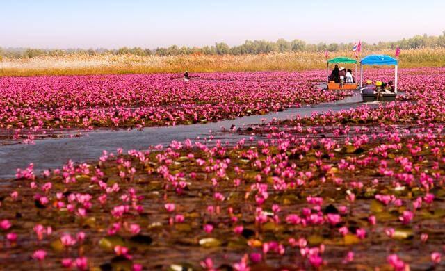 「red lotus lake」の画像検索結果