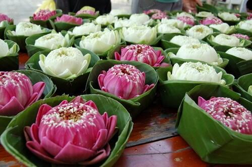 kratong-Lotus3