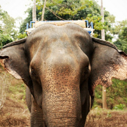 National Thai Elephant Day